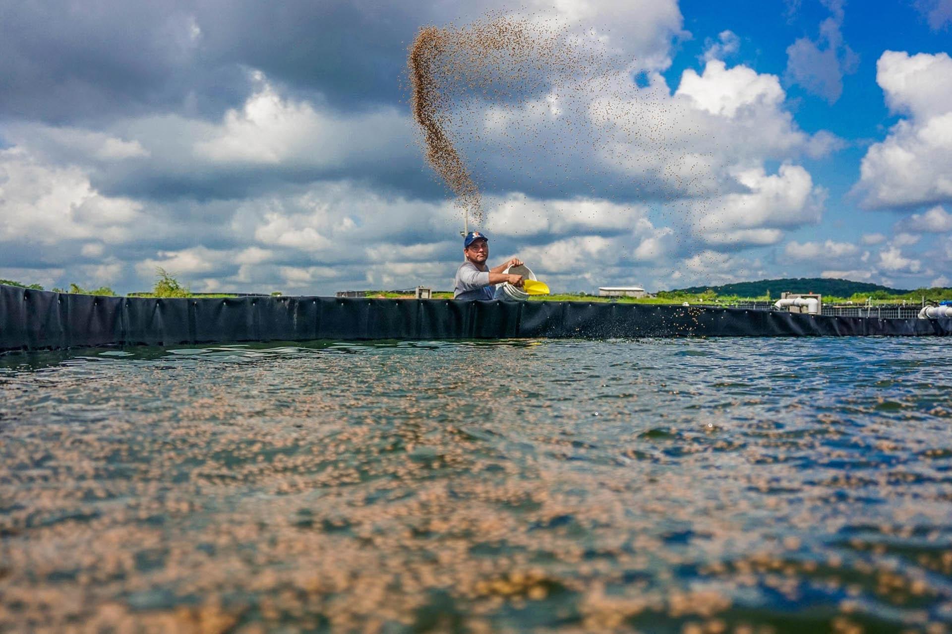 proveedor de materias primas para fabricacion de alimentos para la acuacultura