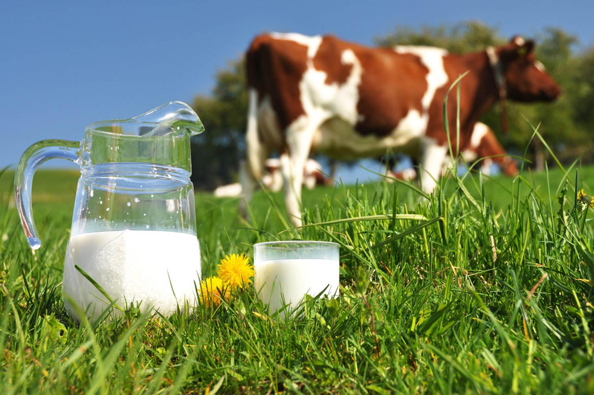 proveedor de materias primas para alimentos de ganado lechero mexico