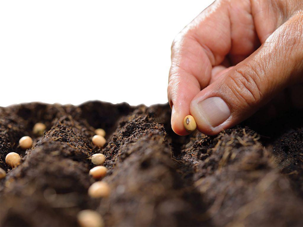 Reporte de siembra e inventarios USDA junio 2020